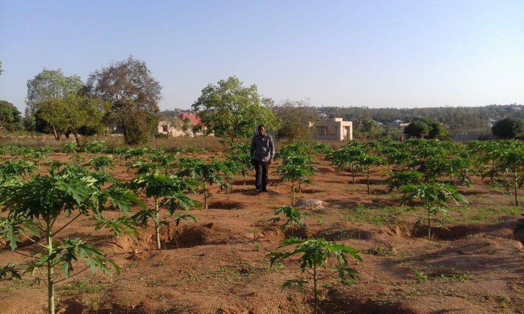 Bishop Charles walks through the Papaya Fruit Farm